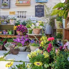 ルーフバルコニー/ウッドフェンス/ガーデン雑貨/花が好き/ガーデニング/多肉植物のある暮らし/... おはようございます⛅️ 昨日は、熊本でも…(3枚目)