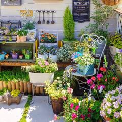 花の寄せ植え/花が好き/花と緑のある暮らし/ベランダガーデニング/ガーデニング/春のフォト投稿キャンペーン/... おはようございます☀ 朝から、青空が広が…