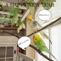 インコのいる暮らし/フェイクグリーン/オカメインコ/セキセイインコ/あけおめ/ペット/... 新年明けまして おめでとうございます✨✨…