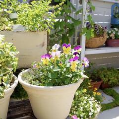 ベランダガーデニング/ガーデニング/ルーフバルコニー/テラス/ベランダガーデン/花のある暮らし 花のお世話🌱🌱🌱  花のお手入れにつ…(3枚目)