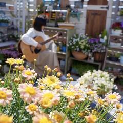ガーデンリビング/ガーデニング/ベランダガーデニング/花のある暮らし/おうち時間/子どものいる暮らし/... こんばんは🌙*゚  週末のおうち時間…