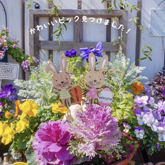 ガーデニング/イースターグッズ/セリア新商品/花の寄せ植え/花のある暮らし/ベランダガーデニング/... こんにちは!  昨日、セリアに行った…