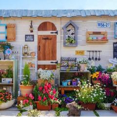 春の花/ガーデニング/ルーフバルコニー/ベランダDIY/花のある暮らし/ナチュラルガーデン/... こんばんは🌙 連日、いいお天気が続いて …