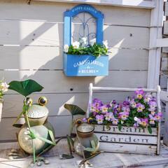 花が好き/ベランダガーデニング/ナチュラルガーデン/ガーデン雑貨/花のある暮らし/花の寄せ植え/... 春を待っている...♪*゚  春の寄せ植…