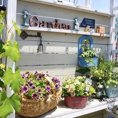 ベランダガーデニング/ガーデニング/ルーフバルコニー/テラス/ベランダガーデン/花のある暮らし 花のお世話🌱🌱🌱  花のお手入れにつ…(4枚目)