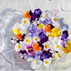 ルーフバルコニー/花のある暮らし/ガーデニング/ベランダDIY/花が好き/春のフォト投稿キャンペーン/... 昨日はガーデニング日和でした💕花期が終盤…