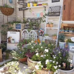 ベランダDIY/花のある暮らし/多肉の寄せ植え/多肉植物/手作りガーデン/ガーデン雑貨/... ナチュラルガーデンに憧れて 色々好きな植…