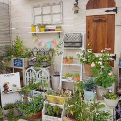 癒しの空間/多肉植物/花のある暮らし/ガーデンテラス/ナチュラルガーデン/ベランダDIY/... ルーフバルコニーでガーデニング楽しんでい…