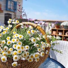 ガーデンテラス/多肉植物/ウッドフェンス/ルーフバルコニー/ベランダガーデニング/花籠/... 昨日のルーフバルコニー☀️ 今週は、ずっ…