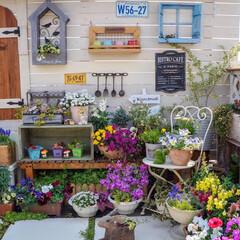 ルーフバルコニー/ウッドフェンス/ガーデン雑貨/花が好き/ガーデニング/多肉植物のある暮らし/... おはようございます⛅️ 昨日は、熊本でも…(2枚目)