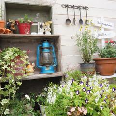 DIY/ベランダdiy中/ガーデン/ベランダ/癒しの空間/花のある暮らし/... 猛暑の中、頑張って咲いてくれてる寄せ植え…