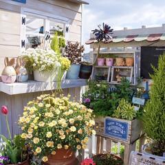 花の寄せ植え/ガーデニング/ベランダガーデニング/花のある暮らし 春…ですね🌸🌸🌸  4月になって、お…(3枚目)