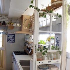 カフェ風インテリア/ナチュラルインテリア/DIY女子/セルフリノベーション/インコのいる暮らし/limiaキッチン同好会/... 朝のキッチンに可愛いお客様🐥