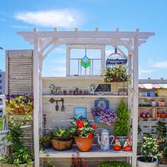 ベランダDIY/青空ガーデン/花が好き/花のある暮らし/ベランダガーデニング/LIMIAインテリア部 おはようございます🎵 青空が戻った、昨日…