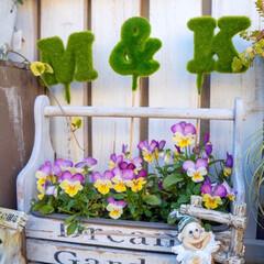 ガーデン雑貨/ビオラ/パンジー/花の寄せ植え/ガーデニング/ベランダガーデニング おはようございます!  真冬並みの寒さで…