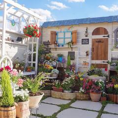 手作りガーデン/多肉植物/花が好き/花と緑のある暮らし/パーゴラ/小屋風diy/... わたしの手作りガーデン🌷🌸🌹🌻 何もない…