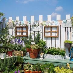 花と緑のある暮らし/ナチュラルガーデン/ガーデンフェンス/ガーデニング/ベランダガーデニング/LIMIAでアイデア投稿/... おはようございます🎵 リミアでアイデア投…