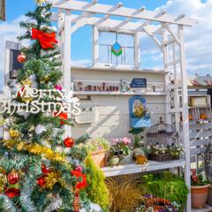 クリスマスツリー/ルーフバルコニー/ガーデニング/クリスマス/リミアな暮らし/リミアの冬暮らし ルーフバルコニーにも クリスマスツリーを…