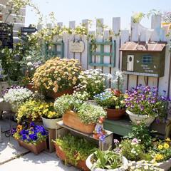 ミルクペイント/ガーデンフェンス/ナチュラルガーデン/ガーデニング/ベランダガーデニング/花のある暮らし/... おはようございます...♪*゚  昨…