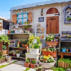 花の寄せ植え/ガーデニング/花と緑のある暮らし/手作りガーデン/秘密の花園/ベランダガーデニング/...  蚊がまだ出てこない この季節☘ ベラン…