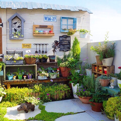 DIY女子/花と緑のある暮らし/ガーデニング/手作りガーデン/屋上ガーデン/ベランダガーデニング/... おはようございます☀ 昨日は嬉しいことが…
