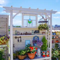 ベランダDIY/青空ガーデン/花が好き/花のある暮らし/ベランダガーデニング/LIMIAインテリア部 おはようございます🎵 青空が戻った、昨日…(2枚目)