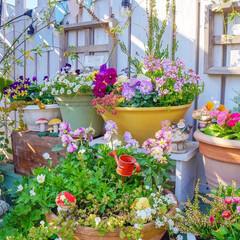花が好き/ガーデン雑貨/多肉植物/花の寄せ植え/ガーデニング/ベランダガーデニング ☆。.:*・゜ 週末なのに、憂鬱なお天…