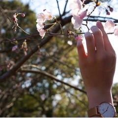 春はすぐそこ/卒業祝い/菜の花畑/桜/LIMIAおでかけ部/小さい春 こんばんは~ たまたま高校卒業したばかり…
