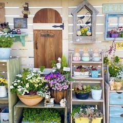 ガーデニング雑貨/小屋風/ナチュラルガーデン/ベランダガーデニング/チューリップ/花のある暮らし/... おはようございます! 暖かい日が続き バ…