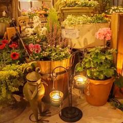 キャンドル/ライトアップ/花が好き/ガーデニング/花の寄せ植え/ベランダガーデニング ナイトガーデン🌃✨ 秋の夜長...♪*゚…