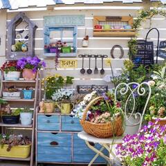 花の寄せ植え/ガーデニング/ベランダガーデニング/花のある暮らし 春…ですね🌸🌸🌸  4月になって、お…(2枚目)