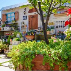 花と緑のある暮らし/新緑の季節/青空ガーデン/ベランダガーデニング/春のフォト投稿キャンペーン/GW/... 新緑の季節🌿🌿🌿 いつの間にか増えたセダ…