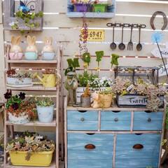 ガーデニング雑貨/多肉植物/花のある暮らし/ガーデニング/ベランダガーデニング/DIY ベランダガーデニング🌼
