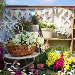 ナチュラルガーデン/クレマチス/寄せ植え/花のある暮らし/ベランダガーデニング/花が好き/... おはようございます🎵 バルコニーの花も …