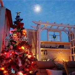 テラス/ガーデン/花のある暮らし/手作りガーデン/ベランダガーデニング/クリスマス/... ライトアップガーデン🎄✨ クリスマスツリ…