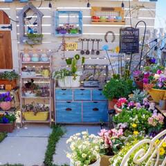 マイガーデン/春の花/立春/春の寄せ植え/ナチュラルガーデン/ベランダガーデニング 春の始まり...♪*゚  立春💕 …