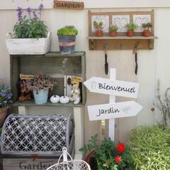 花のある暮らし/板壁DIY/ガーデン雑貨/多肉植物/マンション暮らし/ベランダガーデニング/... 多肉を増やしたくて、苗を買ってきました♪…