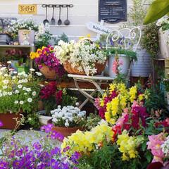 ベランダガーデニング/花のある暮らし/ベランダDIY/ルーフバルコニー/ガーデニング/春の花/... おはようございます🎵 毎日、清々しい朝で…
