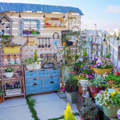 ガーデニングdiy/花のある暮らし/ルーフバルコニー/ナチュラルガーデン/ベランダガーデニング/花の寄せ植え/... おはようございます☀️.°  バルコニー…