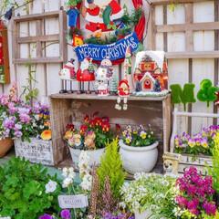 ベランダガーデニング/ガーデン雑貨/クリスマス飾り/クリスマスガーデン/冬の寄せ植え/リミアな暮らし こんにちは💕  バルコニーは、いま アリ…