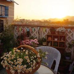 夕焼け空/花のある暮らし/ベランダガーデニング 昨日の夕焼け空🌅 ドラマチックで綺麗でし…
