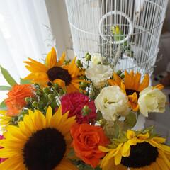 Flower/ホワイトインテリア/鳥かご/ビタミンカラー/向日葵/インコのいる生活/... こんにちは~ 少しずつ風が爽やかになって…