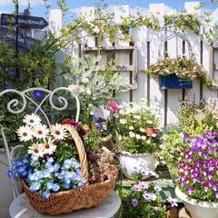花の寄せ植え/ガーデニング/ベランダガーデニング/花のある暮らし 春…ですね🌸🌸🌸  4月になって、お…
