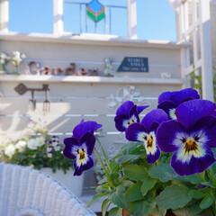 花が好き/花の寄せ植え/手作りガーデン/ナチュラルガーデン/ベランダガーデニング/ガーデニング ガーデニング日和☀️