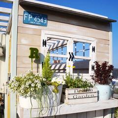 パーゴラ/小窓/小屋/ナチュラルガーデン/春の寄せ植え/マイガーデン/... おはようございます️️️⛅️  先週…
