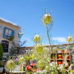 ベランダDIY/青空ガーデン/花が好き/花のある暮らし/ベランダガーデニング/LIMIAインテリア部 おはようございます🎵 青空が戻った、昨日…(4枚目)