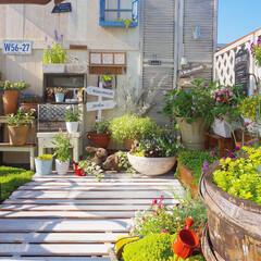 ナチュラルインテリア/多肉植物のある暮らし/花のある暮らし/好きな場所/マンション暮らし/花が好き/... 寝具用の丈夫なすのこに、防腐剤とペンキを…