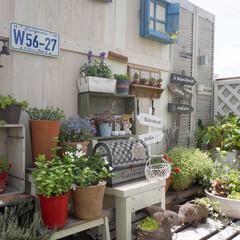 マンション暮らし/ワイン箱リメイク/板壁DIY/ガーデン雑貨/多肉植物/花のある暮らし/... ベランダガーデニング中☆ 少しずつ、範囲…