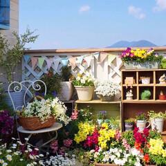 ナチュラルガーデン/クレマチス/寄せ植え/花のある暮らし/ベランダガーデニング/花が好き/... おはようございます🎵 バルコニーの花も …(3枚目)