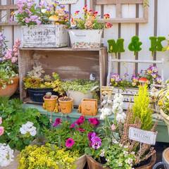 ガーデニング/花の寄せ植え/ガーデニング日和/ベランダガーデニング/花が好き/ビオラ おはようございます️️️⛅️ 昨日は、ガ…